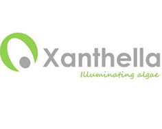 Image article XANTHELLA